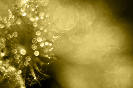 dewdrops: Shiny golden drops and bubbles - and holiday greeting card design