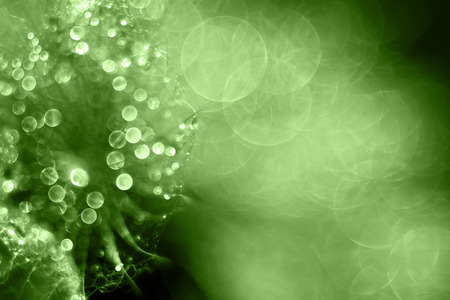 dewdrop: Shiny green drops and bubbles - holiday and greeting card design