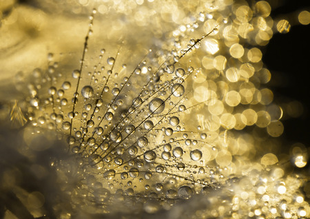 dewdrops: Glittering dewdrops - golden abstract background