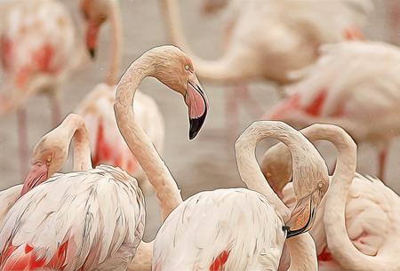 flamingos: Beautiful pink Flamingos close up - digital painting