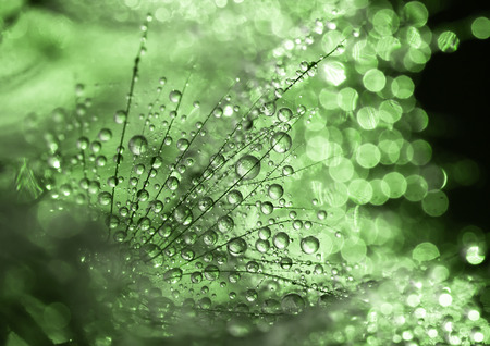 dewdrops: Glittering dewdrops - green abstract background