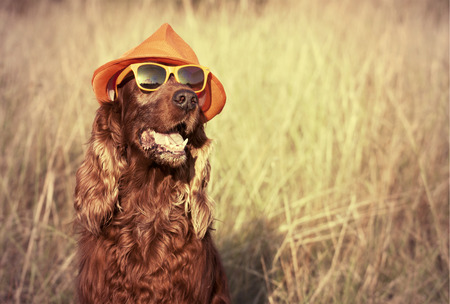 funny animals: Funny retro dog wearing sunglasses and hat