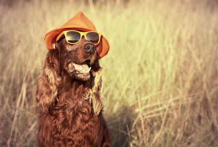 Perro retro divertido con gafas de sol y sombrero