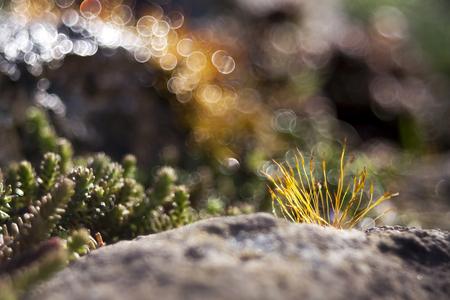 mossy: Beautiful mossy stones Stock Photo