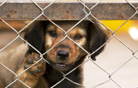perro asustado: Solitaria cachorro de perro que mira detr�s de una cerca