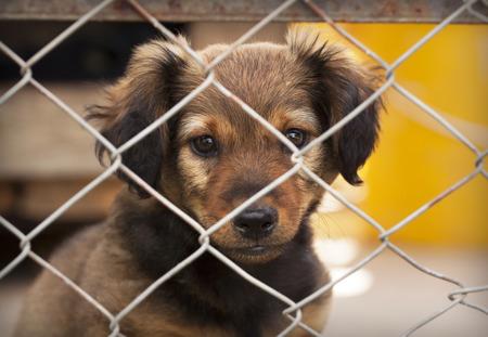 perro asustado: cachorro de perro triste detrás de una cerca
