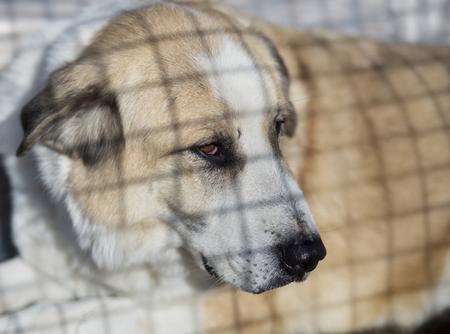 perro asustado: Solitaria triste perro buscando detr�s de una valla de alambre