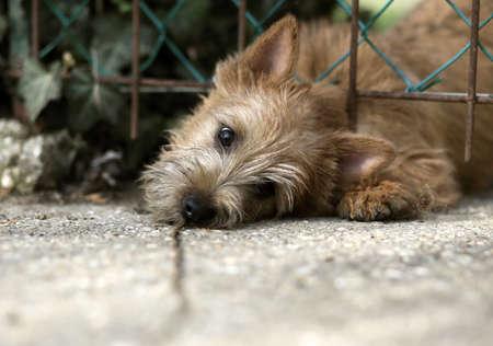 perro asustado: perrito lindo perro mirando por encima de la valla
