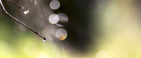 simply: Simply abstract nature background of dewdrop and lights