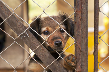 looking behind: Lonely dog puppy looking behind a fence