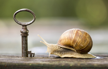 apartment search: Key and snail - new home and real estate concept