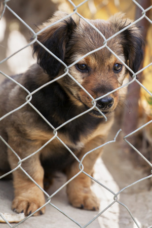 looking behind: Shelter dog rescue - cute puppy looking behind the fence