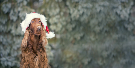 Website banner of a Christmas dog with Santa Claus hat Stock Photo