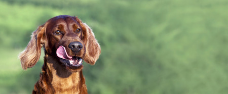 Website banner of the funny hungry dogs licking his mouth Stock Photo