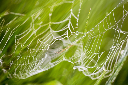 Spider web with dewdrops on the morning Stock Photo
