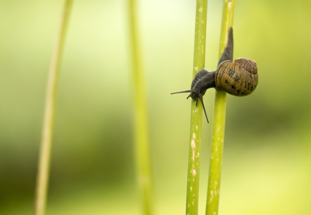 Small snail crawling on green plant Stock Photo