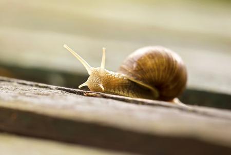 느린 달팽이의 근접 촬영의 초상화