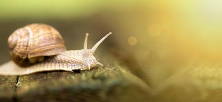 여름에 느린 달팽이의 웹 사이트 배너