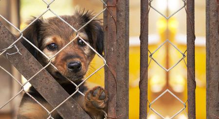 Het concept van de hondredding - websitebanner van een puppy achter een omheining Stockfoto - 82651376