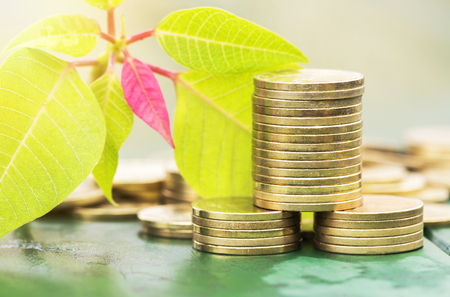 Business success concept - gold money coins and fresh leaves Stock Photo