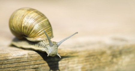 Web banner of a slow snail with blank, copy space 스톡 콘텐츠