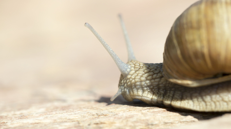 Cluse-up of a slow snail - web banner with blank, copy space