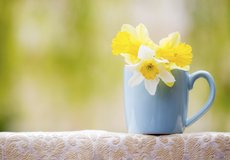 Spring forward, springtime concept, Easter daffodil flowers, background with copy space Banco de Imagens