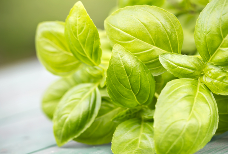 Natural healthy herb and vegetable raw salad food, fresh green basil leaves