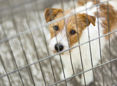 Pet travel, transport. Cute dog puppy looking in the cage.