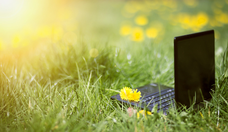 Online learning, e-learning, sunny summer concept, laptop in the grass with flowers