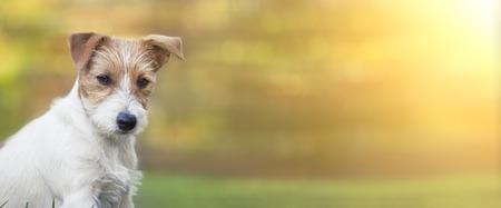 Happy funny pet dog puppy listening, summer web banner 写真素材