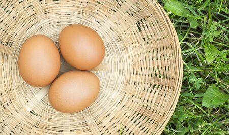 Web banner of fresh eggs in a basket in the grass