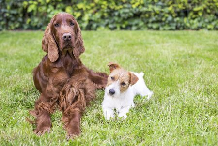 Pet dog friendship, relationship concept - happy cute dog friends resting in the grass in summer