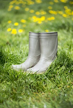 Summer gardening, green rubber boots and yellow flowers in the grass
