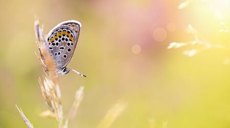 Web banner of a beautiful butterfly as sitting sitting on the grass - nature, summer concept 写真素材