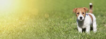 Pet summer concept, web banner of a cute dog puppy as standing in the grass