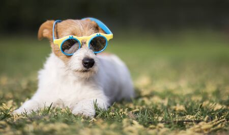 Pet dog wearing sunglasses, happy hot summer concept, web banner, background with copy space 写真素材