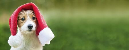 Cute happy christmas pet dog puppy with santa hat, web banner with copy space
