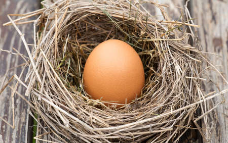 Egg in nest on a wooden table, new life concept 免版税图像