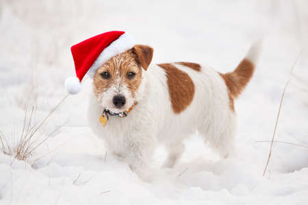 Happy cute snowy christmas holiday santa pet dog puppy looking in the white winter snow