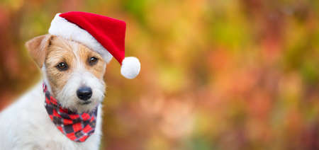 Happy cute christmas santa pet dog puppy smiling. Holiday card background, web banner with copy space.
