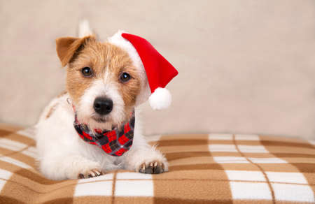 Happy cute jack russell terrier santa christmas holiday pet dog puppy listening on the sofa
