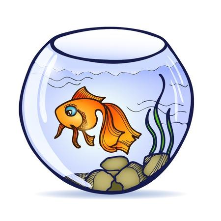 gold fish bowl: goldfish swimming in round aquarium with seaweed