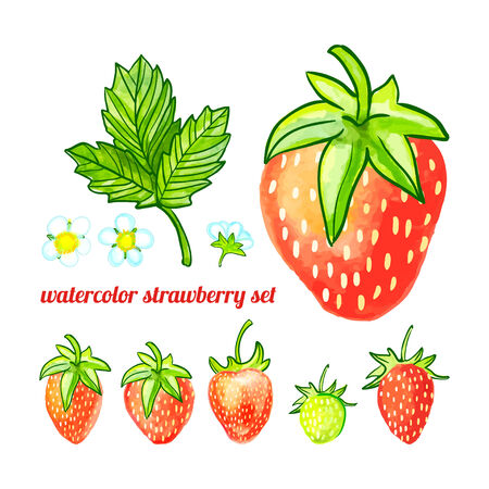 watercolor set of six strawberries, leaves and flowers Vector