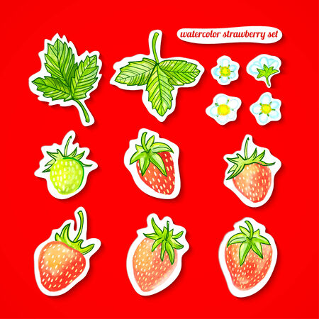 illustration watercolor set Stickers with strawberries, leaves and flowers on a red background Vector