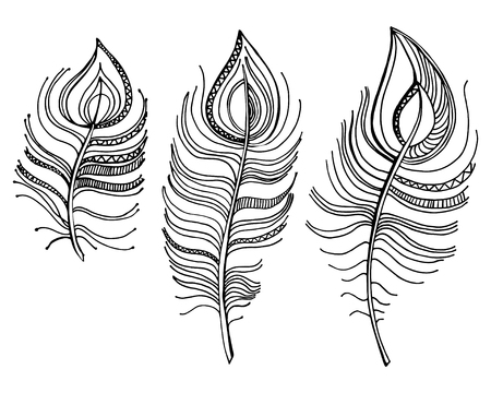 vector illustration. Doodle set of three  feathers, isolated on white background Vector