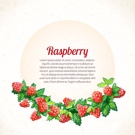 Vector illustration. Texture watercolor background with watercolor  raspberry and leaves. Organic Food.