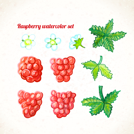 Vector illustration. Raspberry watercolor set. Organic Food.