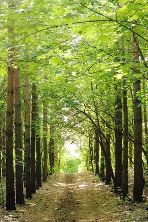 road in the forest Stock Photo - 3258374