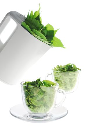 Green freshness Stock Photo - 3494922